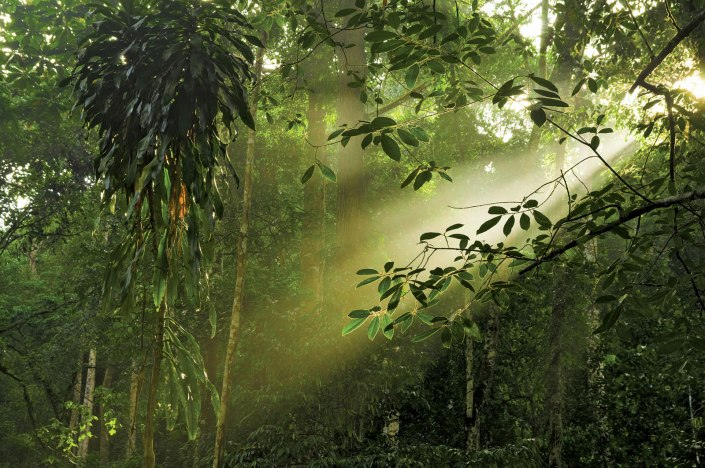 Shaft-light-canopy-rainforest-Malaysian